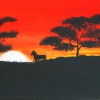 Savanne/Pferde, 30x90cm, Acryl auf Leinwand