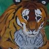 Tiger, 70x100cm, Acryl auf Leinwand